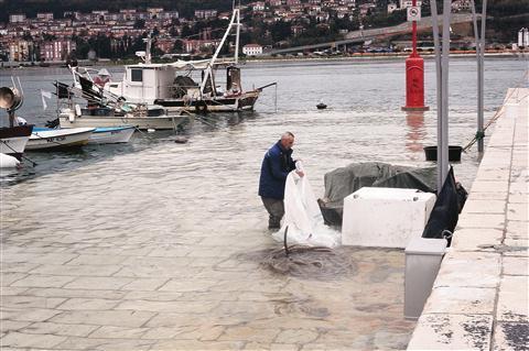 Morje bo med 3. in 10. uro zjutraj preseglo gladino 3,15 metra in poplavilo nižje dele obale