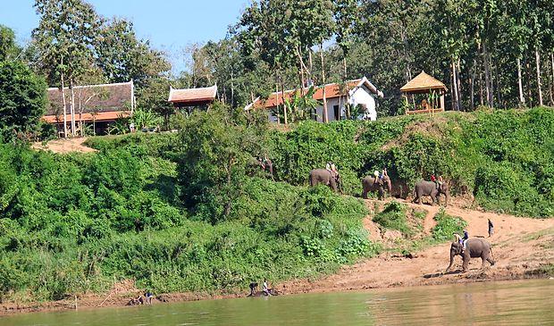 Laosu pravijo tudi dežela milijonov slonov. Danes jih v državi  živi precej manj, veliko od njih pa uporabljajo za turizem.