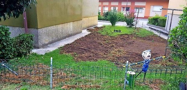 Tako pa je videti razdejanje, ki so ga divji prašiči pustili med  enim izmed nočnih pohodov po Gorici.