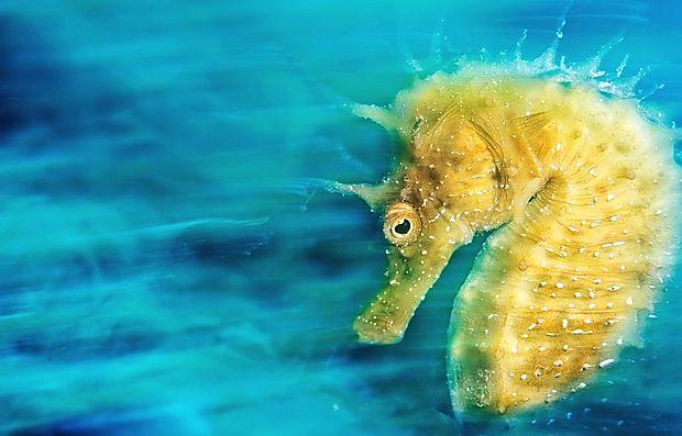 Zmagovalna fotografija morskega konjička iz Sesljana