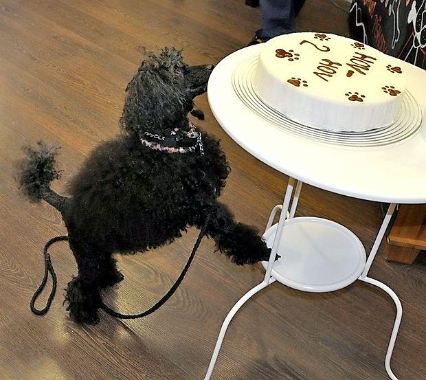 Pasje torte v slaščičarni Hov-Hov.