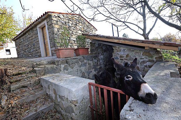 Istrsko kažeto so odprli  12. novembra. V njej naj bi zaživela  turistično-informacijska točka,  kjer bi opozarjali  na  posebnosti  podeželja ter  pripravljali   delavnice, seminarje in   degustacije. Ključe so zaupali  Kodarinovim.