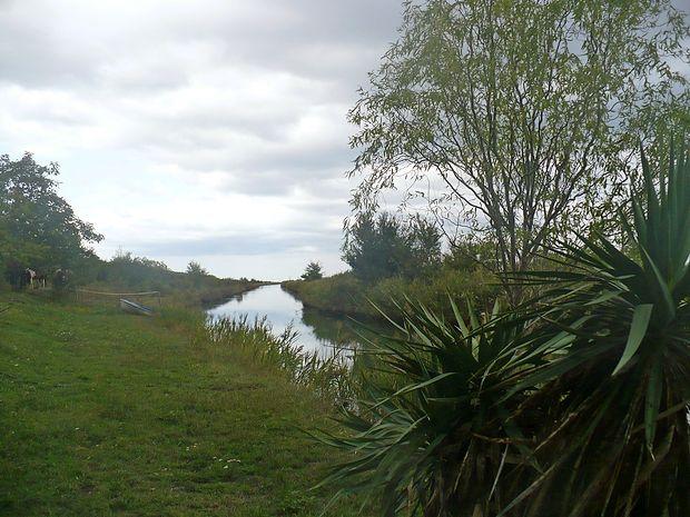 Po kanalu sv. Odorika se  reka Dragonja izliva v morje.