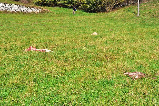 Pogled po Čepovanski dolini pri naselju Puštale je bil  precej  zastrašujoč.