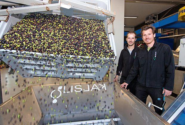 Brata Gregor (levo) in Matej Lisjak skrbita za predelavo v šalarski torkli svoje družine, ki so jo pognali lani sredi  oljkarske sezone. Njun oče Franko skrbi za delo v njihovi oljarni v Krkavčah.