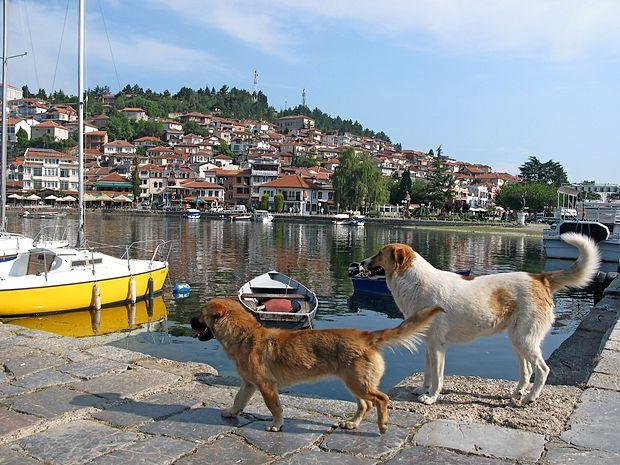 Potepuški psi so sila prijazni, nevsiljivi in tudi čisti, predvsem  pa željni človeške družbe.