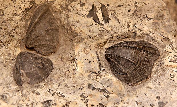 Fosili školjk odsevajo stoletja življenja na našem planetu.