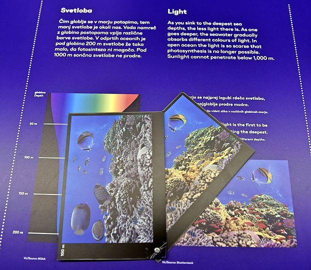Barvitost življa v morju je odvisna od svetlobe: v vrhnjih plasteh vidimo vse barve (desni kartonček), nato izgine  rdeča (srednji kartonček) in postopoma še ostale.