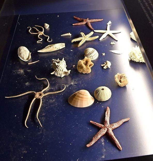 Morske zvezde: ne ena, cela paleta jih je!