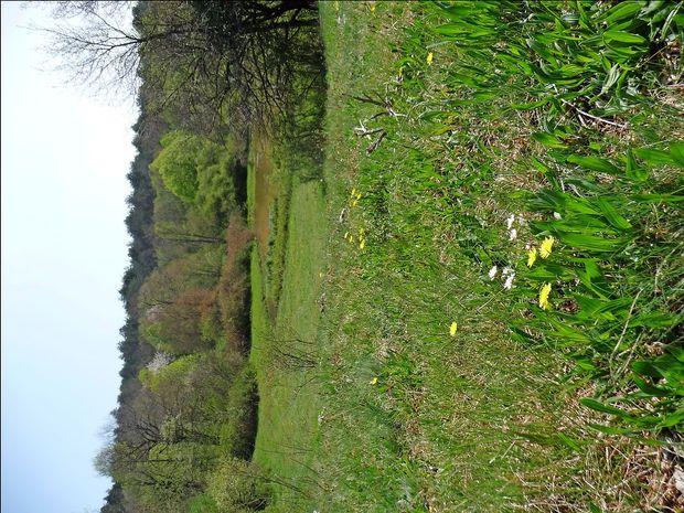 Če izginejo krave, izginejo tudi kali (v ozadju je kal Globočaj  pri Brestovici pri Povirju) in  suhi kraški travniki (v ospredju), ki  se ponašajo z izredno veliko pestrostjo rastlin. Med njimi  je  tudi veliko zdravilnih zelišč.