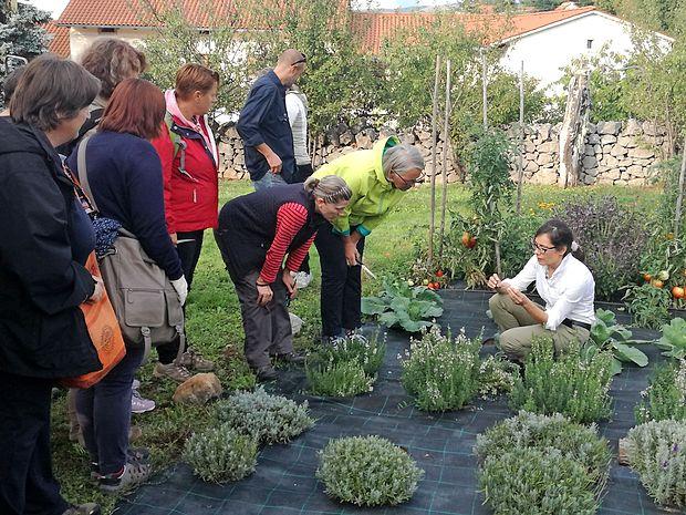 Andrejka Cerkvenik (v belem) je udeležencem delavnic o  šetraju praktično pokazala, kateri poganjki so primerni za  razmnoževanje teh rastlin s potaknjenci.