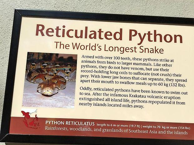 V enem od floridskih terarijev je na ogled piton, ki je v naravi ogrožal živali in ljudi. O tej kači  je na voljo tudi podroben opis.