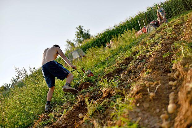 Pri svojem delu so soncu in visokim temperaturam izpostavljeni tudi kmetje.