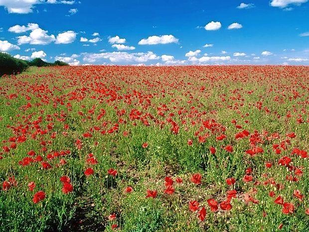 Prijetno je hoditi po travniku, a primerno oblečeni in obuti, saj  na njem med drugim prebivajo tudi žuželke.