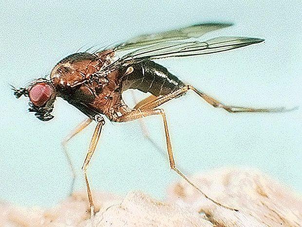 Poletje spremljajo komarji, ki v zelenju prežijo na žrtve.