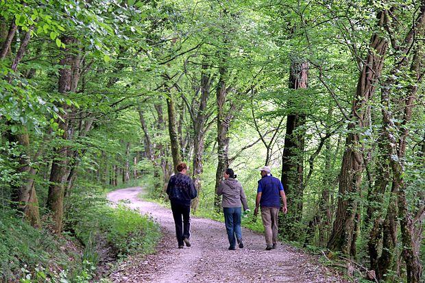 Že pol ure hoje na dan občutno okrepi zdravje in delovanje  srca.