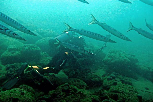Zaradi klimatskih sprememb prihajajo k nam ribe, doslej znane v južnejših morjih