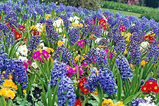 Ne čakaj pomladi ...