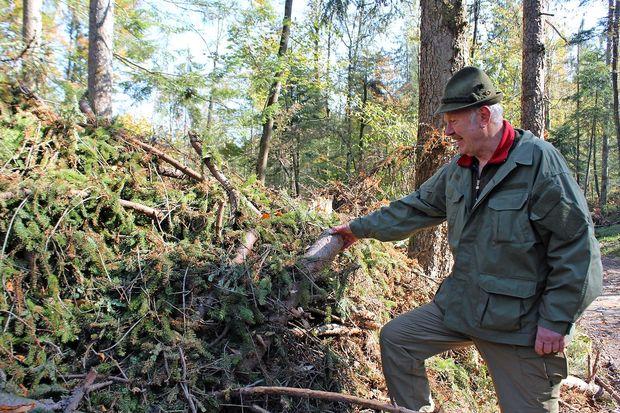V gozdovih je zaradi birokracije nastala milijonska škoda