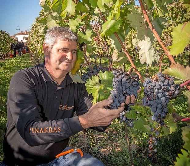 Lepo je, da ima vsak teritorij svoje vino in svoje ciljne skupine