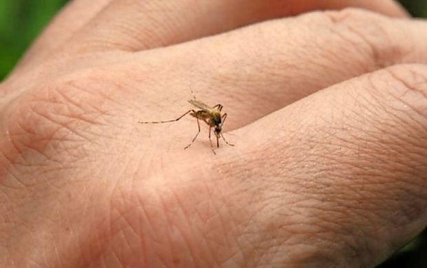 Komarji so že na pohodu