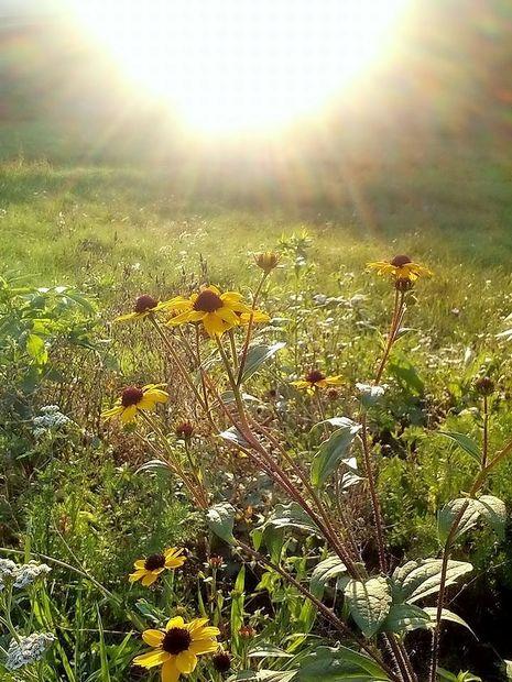 Danes na Primorskem sonce
