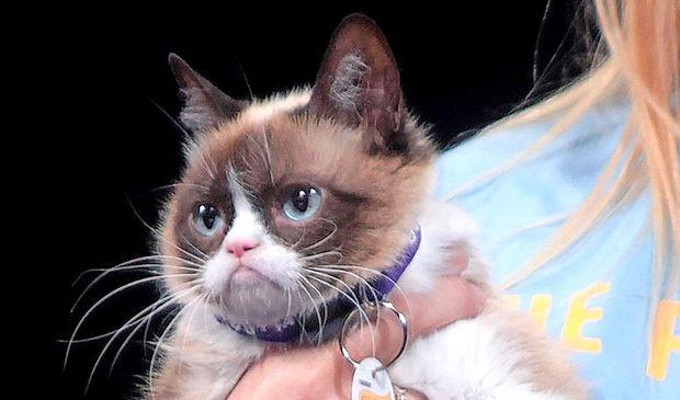 Poslovila se je najbolj slavna mačka na svetu
