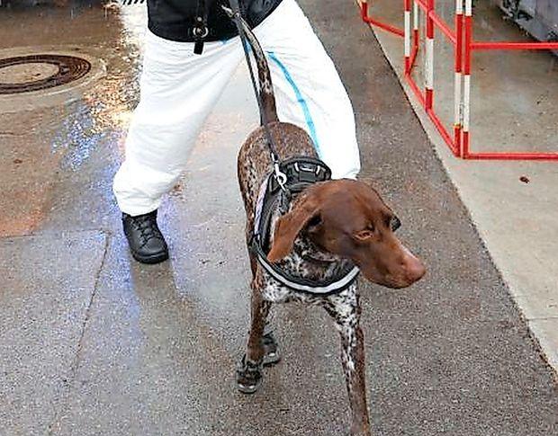 Policistom bosta pri preiskovanju pogorišč pomagala posebej izurjena službena psa