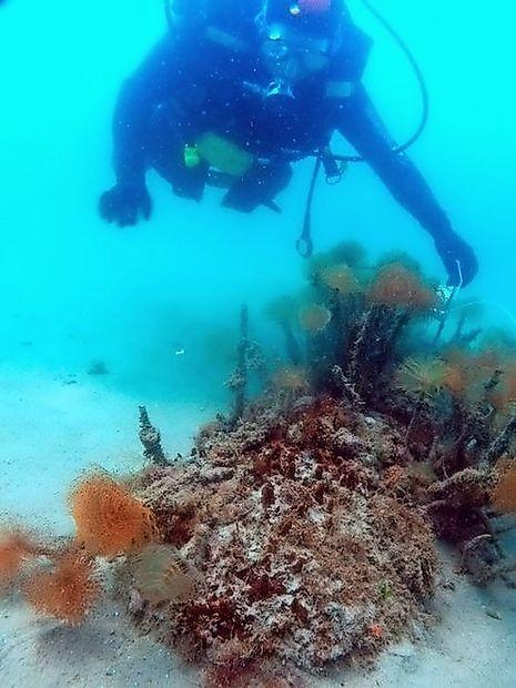 O trotilu iz morja pred Gradežem še vedno ni ne duha ne sluha
