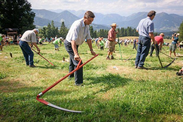 Na lovu za rekordom travo kosilo 570 koscev, med njimi tudi Borut Pahor