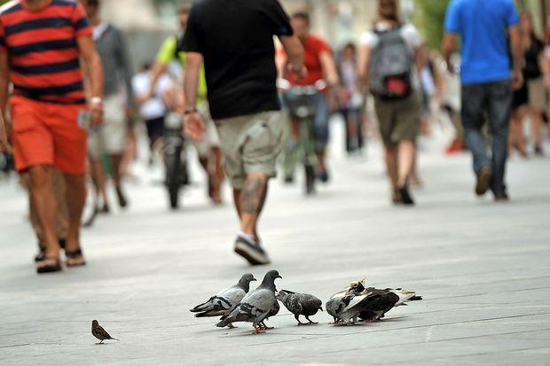 Britanski znanstveniki razvili aplikacijo za iskanje najvarnejše poti za pešce