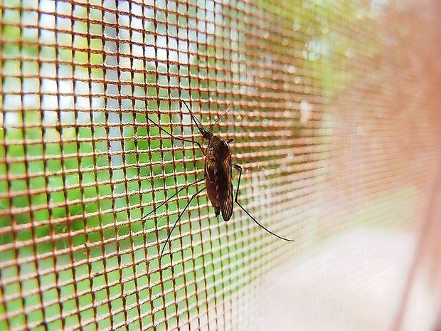 Zagrebčane pestijo komarji