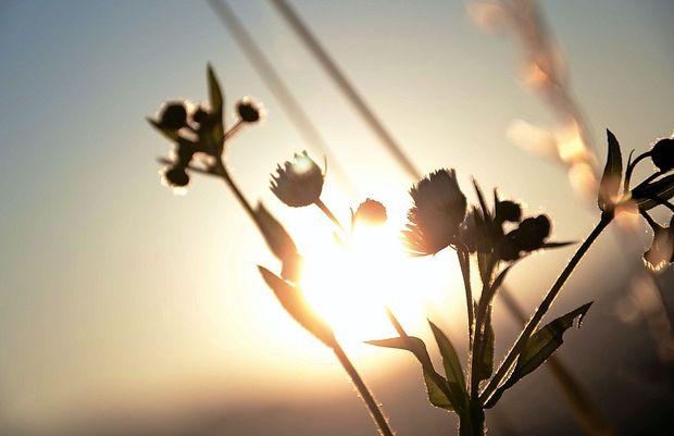Primorska bo obsijana s soncem