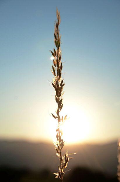 Na Primorskem sonce in burja