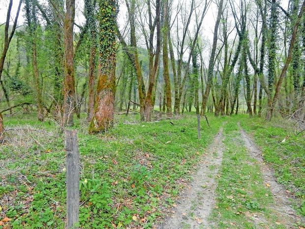 Pri sečnji dreves umrl 65-letni moški