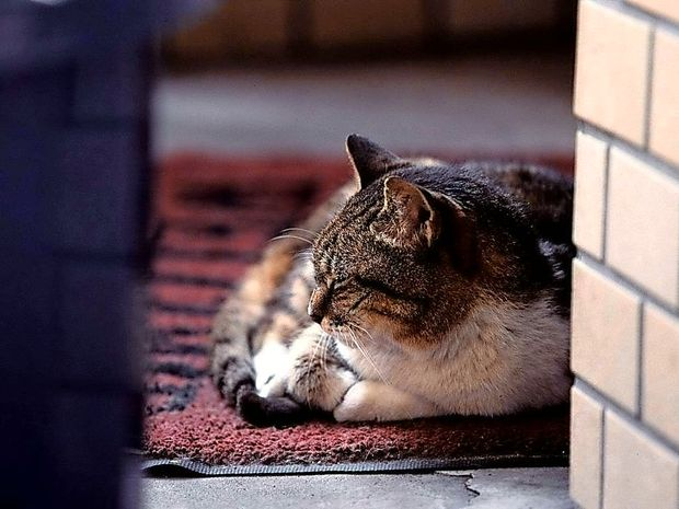 Mijavkajoča mačka družini najverjetneje rešila življenje