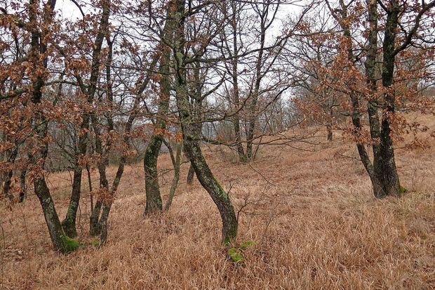 Neznanec na Ajdovskem ukradel drevesa