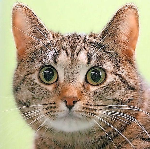 V Italiji je danes dan mačk
