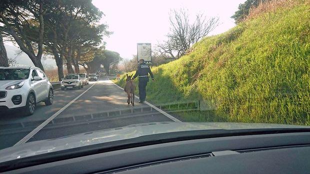 Osel se je sprehajal po cesti