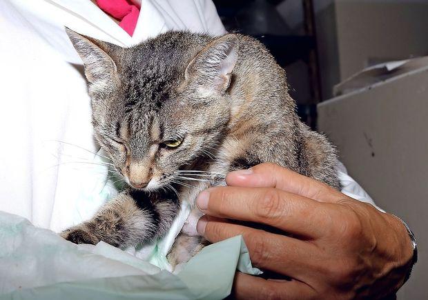 Na Cipru dvakrat več mačk kot ljudi
