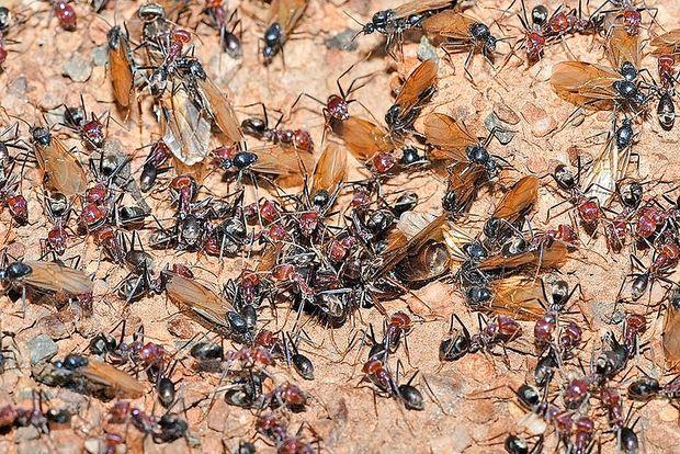 Moč preživetja žuželk