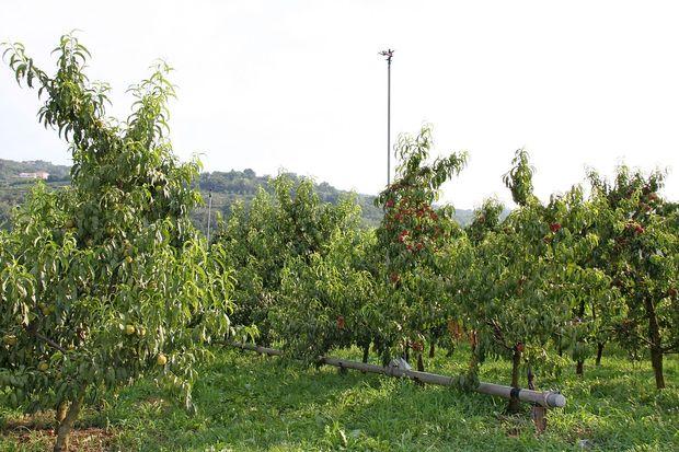 Ajdovci bi namakali tisoč hektarov zemljišč