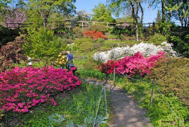 Vrt tisočerih cvetov vabi na ogled