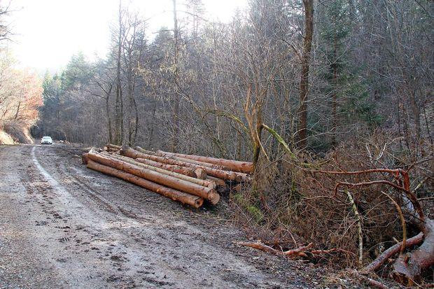 V gozdu v Brkinih se je smrtno ponesrečil 69-letnik