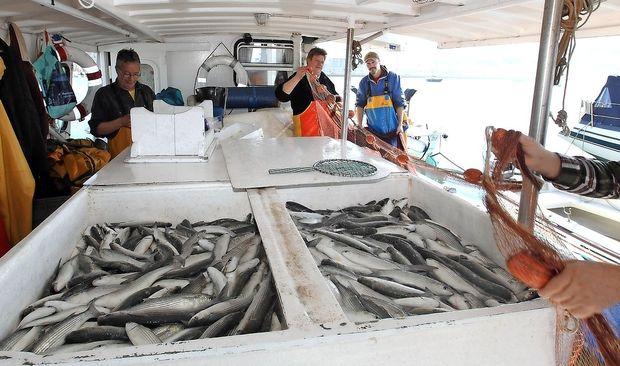 Danes bomo pojedli vse ribe