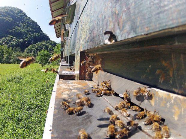Tako slabe pomladi čebele še niso imele