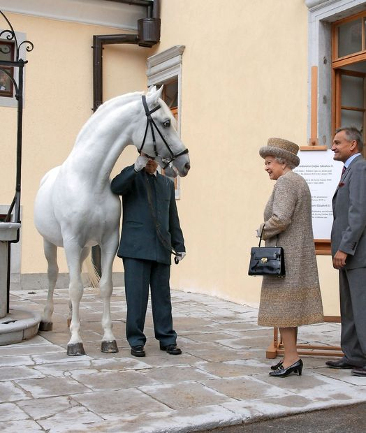 Policija preiskuje okoliščine pogina kraljičinega lipicanca