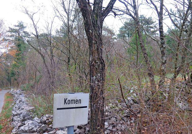 Na Krasu prodajajo les nekdanjih agrarnih skupnosti