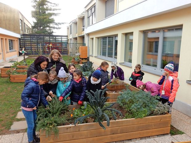 Za šolski ekovrt skrbijo tudi v mrazu