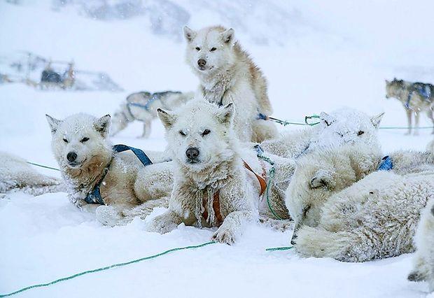 Ledeni lovci v gozdu